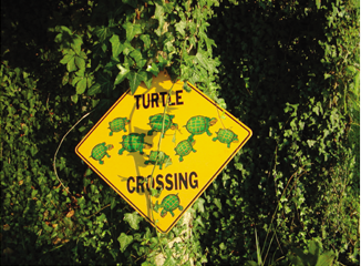 Watch for the turtles crossing our driveway--especially in spring!