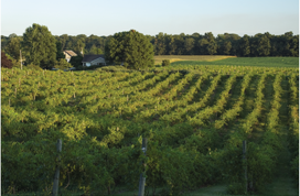 The Terroir of Turtle Run:  The rolling hills add flavor and complexity to our estate grown wines